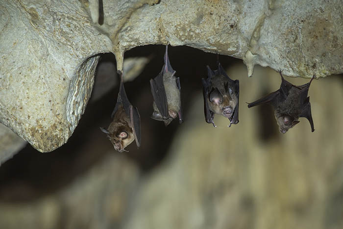 bats-hanging-in-a-cave.jpg