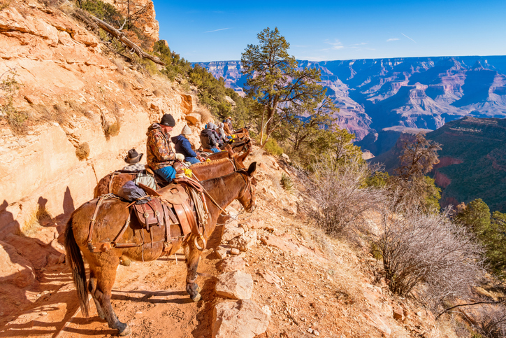 mule-ride-at-grand-canyon.jpg